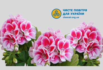 Незвичний громадський моніторинг: захист квітів на Павло-Кічкасі